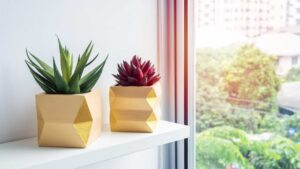 indoor plants by a window
